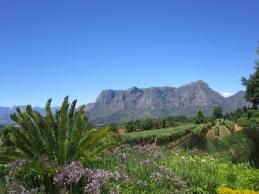 Winnice Stellenbosch